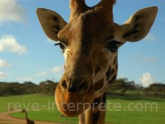 reve de girafe - interpretation des reves